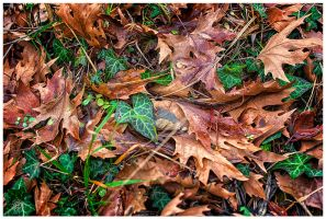 Winter Leaves by etsap
