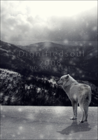 Cry Wolf by Dignifiedsoul