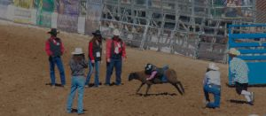 Mutton Bustin 1 by Robomarkov