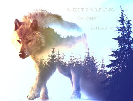 The Wolf and The Forest by simanunan