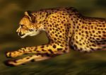 Catamancer Cheetah by TamberElla