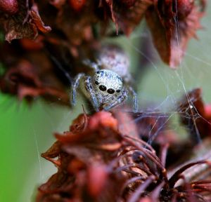 Little Jumper by WanderingMogwai