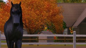 The Black Stallion by The-Everlasting45