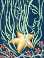 Starfish by hectigo