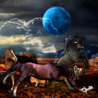 Horse Attack by Fotomonta