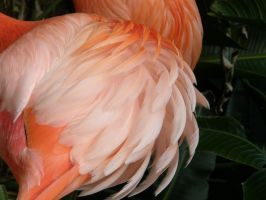 Flamingo Feathers 1 by NoxieStock