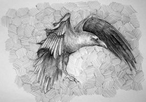 crow - ballpoint pen drawing by speedy-painter