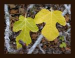 green and yellow leaves by aelthwyn