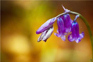 Ring open the bells of spring by bexa