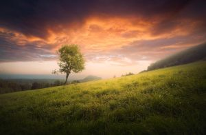 Lonely Tree by hateom