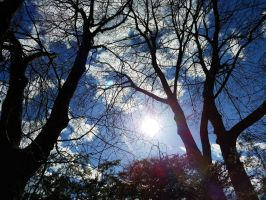 Old Trees and Sun by GUDRUN355