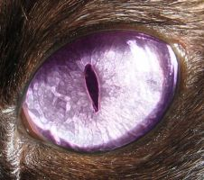 Cat's Eye by ryano292