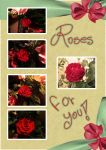 Roses For You by josy-hadez