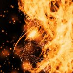 fire lion by Capitan-Mark-Antony