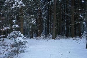 Stock background snow forest VI by MariKariS