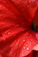 Droplets on Red by KeyEternal