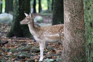 Deer 2 by Cassidy-Slingby
