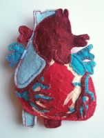 Anatomical Felt Heart by Lucianomie