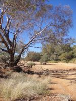 Dry River Bed by Maybell-Hx