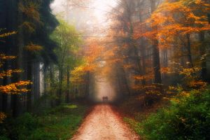 Autumnal by Steppenwolff