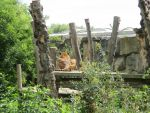 Prague ZOO I Like Big Butts and I Can not Lie by NemuArt