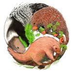 Three Porcupines by NocturnalSea