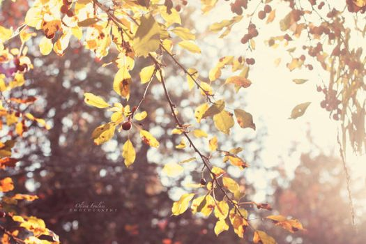 yellow autumn sun by ArtByOlivia