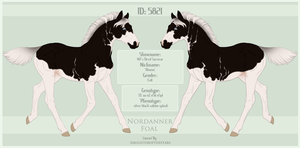 5821 Nordanner Foal  Redesign by SWC-arpg
