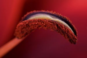 Pink by waleed-DP