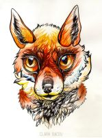 Fox by ClaraBacou