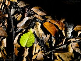 Only Green Leaf by eanimusic