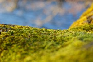 Moss 5 by Stichflamme-Stock