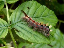 Caterpillar..anyone know by Thelma1