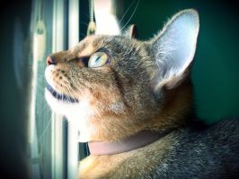 Mia by window chirping at sparrows by farfromgroovin