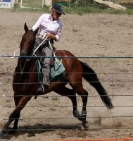 Stock - Horse Team Penning - 054 by aussiegal7
