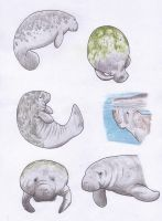 Manatees by Dontknowwhattodraw94