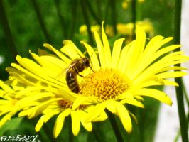 The working Bee. by Saici