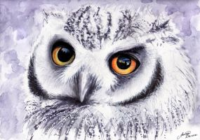Owl by Andrew-Willson