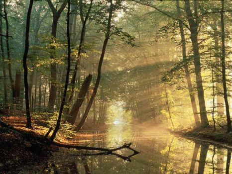 Bosque by TOR-7