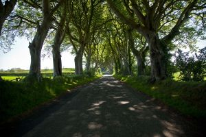 The dark hedges 3 by magikstock