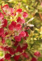 Bees 8 by Coraloralyn
