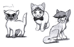 Link cats by BlueLink
