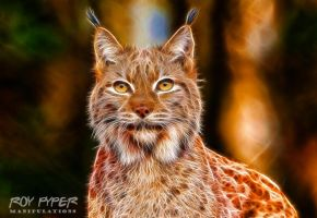 Lynx: Fractalius Re-Edit by nerdboy69
