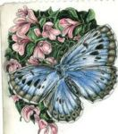 colored pencil drawings by amilene