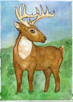 White Tailed Buck by Starrydance