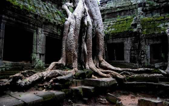 Amazing Ta Prohm by GaaraofHSV