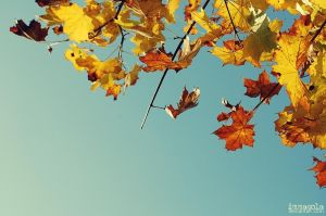 .autumn leaves by immacola