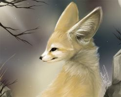 Daily animal 4 - Fennec by DanjiIsthmus
