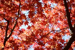 Red canopy by MagicCometART