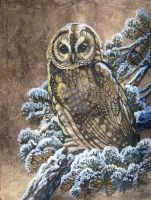Barred Owl First Snow by HouseofChabrier